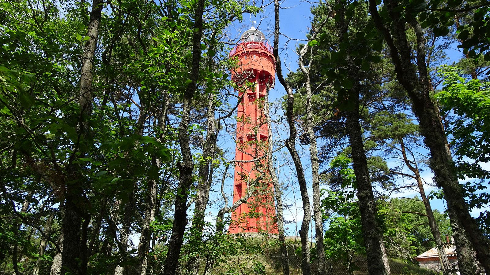 Estlands Wälder beherbergen einen  riesengroßen, roten Turm